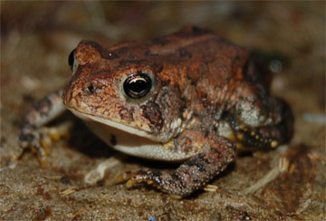 Amphibians - A collection of Amphibians images at Pics4Learning.