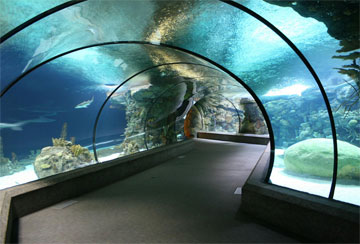 Zoos And Aquariums - A collection of Zoos And Aquariums images at Pics4Learning.
