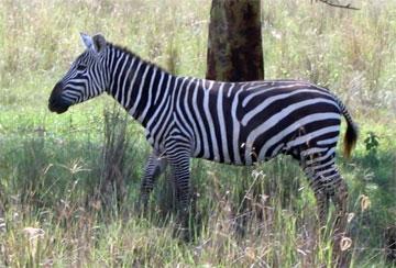 Kenya - A collection of Kenya images at Pics4Learning.