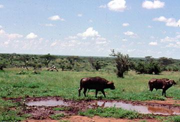 Tanzania - A collection of Tanzania images at Pics4Learning.